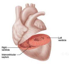 Interventricular septumInteratrial septum