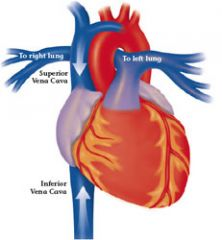 Drains blood from the body into the Right atrium of the heart