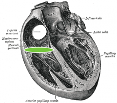 orifice between right atrium and ventricle