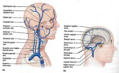 • External jugular vein- draining the scalp and face• Internal jugular vein- collecting blood from the skull, brain, superficial parts of the face and much of the neck• Right and left subclavian veins• Right and left axillary veins• Righ...