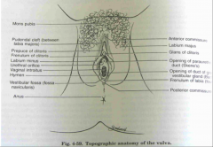 the clit above Vein