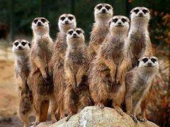 Une population désigne un ensemble d'individus d'une même espèce vivante se perpétuant dans un territoire donné.