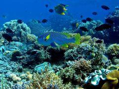 Un écosystème désigne l'ensemble formé par une association ou communauté d'êtres vivants et son environnement biologique, géologique, édaphique, hydrologique, climatique, etc.