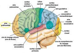 La physiologie étudie le rôle, le fonctionnement et l'organisation mécanique, physique et biochimique des organismes vivants et de leurs composants.