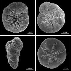 Le terme protistes désigne les eucaryotes autres que les animaux, champignons, et plantes, selon les définitions. Les protistes sont des vivants unicellulaires dont la taille est d'environ 0,1 mm.