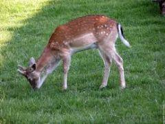 L'hétérotrophie est la nécessité pour un organisme vivant de se nourrir de constituants organiques préexistants.