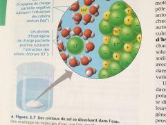Un composé hydrophile est un composé ayant une affinité pour l'eau et tendance à s'y dissoudre.