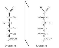 Les glucides sont une classe de molécules organiques contenant un groupement carbonyle (aldéhyde ou cétone) et plusieurs groupements hydroxyle (-OH).