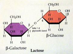 2 monomères de glucide.