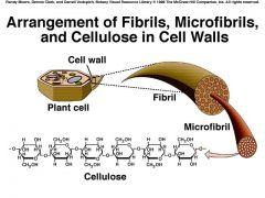 Polymère de glucose végétal constituant la paroi cellulaire.