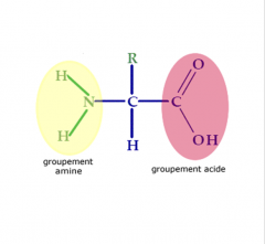 Carbone entouré d'un groupement amine, un hydrogène, un groupement carboxyle et un radical variable.