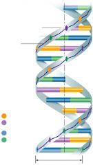 Polymère synthétisé dans le noyau de la cellule (ADN et ARN).