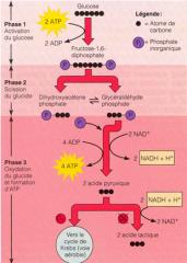 Séquence d'étapes où une molécule est modifiée en produits à l'aide d'enzymes.