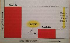 Dégagement net d'énergie libre (∆G négatif).