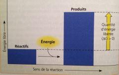 Absorption de l'énergie libre de l'environnement (∆G positif).