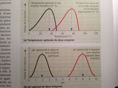 Température (37°C), pH (entre 6 et 8), cofacteurs, inhibiteurs enzymatiques.