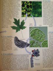 1-Atome 2-Molécule 3-Organite 4-Cellule 5-Tissus 6-Organes 7-Systèmes 8-Organismes 9-Populations 10-Communautés 11-Écosystèmes 12-Biosphère