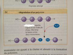 Décomposition d'une substance par l'eau grâce aux ions H3O+ et HO- provenant de la dissociation de l'eau.
