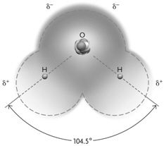 The molecule shown in the figure above is held together by ____.
