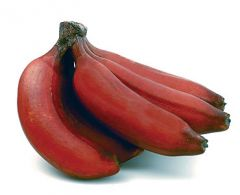 Bananas, Red