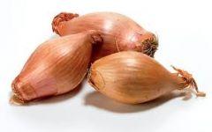Onion, Shallot