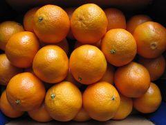 Oranges, Small Navel