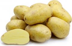Potato, Yukon