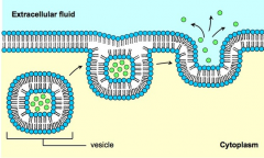 Exocytosis * The process by which large substances exit the cell without travelling across the plasma membrane * Vesicles (usually derived from the golgi) fuse with the plasma membrane expelling their contents into the extracellular environment