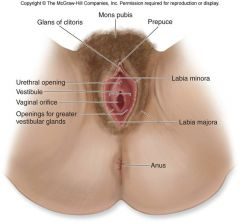 Paired folds immediately inferior to labia majora No pubic hair present Pigmented Due to high melanocyte content