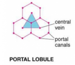 a triangular region whose 3 apices are neighboring central veins