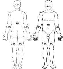 C Half arm 4.5% Whole leg 18% Half of front trunk 9%  =31.5%