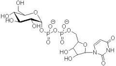 Palmitoylierung