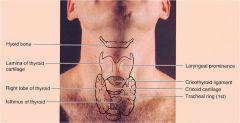 Anat Posterior Head And Neck Flashcards Cram Com