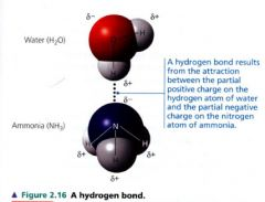 (BIOL 211) Chapter 2: The Chemical Context of Life ...